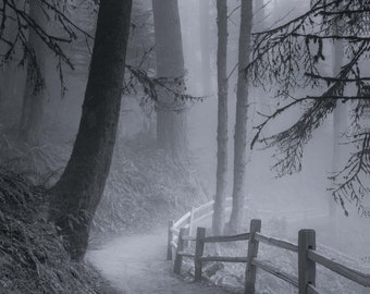 Trail Through the Misty Forest