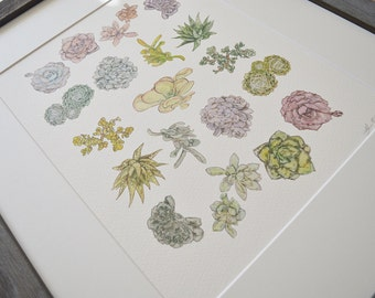 Succulent Study Watercolor Print