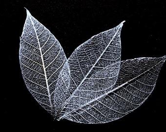Silver Skeleton Leaves