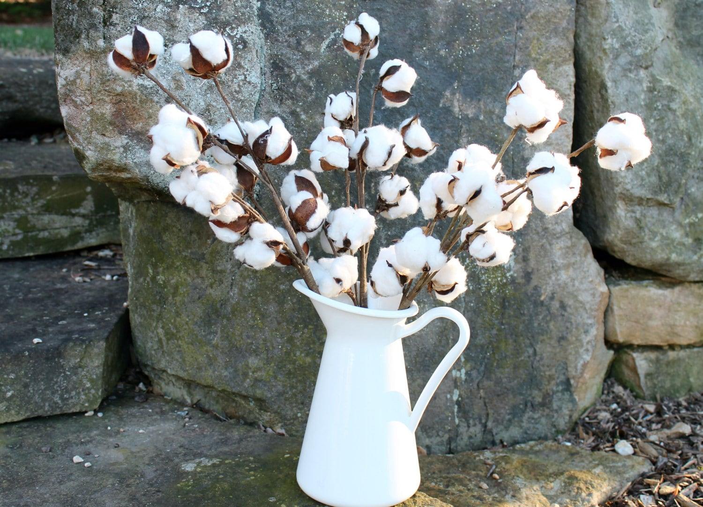 Cotton stems set of 3 20 cotton stems cotton branches zoom reviewsmspy