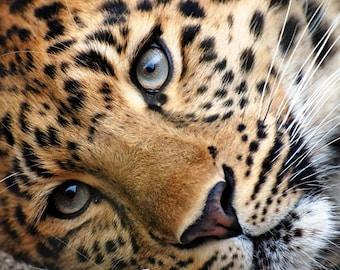 Cheetah counted cross stitch kit