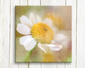 White Daisies art printed on canvas - wedding gift
