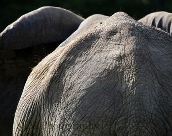 Elephant - E;ephant from Behind - Elephant Walking Away - Animal Photography - Wildlife - Fine Art Photography