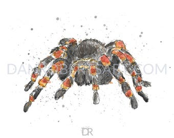 100 Animals, 100 Days: 30/100 The Mexican Red-Kneed Tarantula DIGITAL FILE