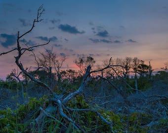 Driftwood, Sunset,Coastal Decor,Fine Art Print, Photography, Wall Art,Island Beach