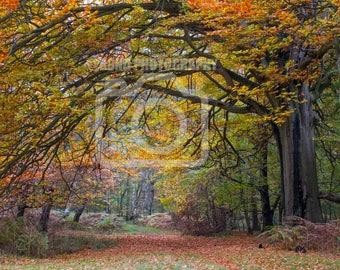 Photographic Print - Walk in an Autumn Wood