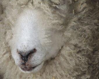 Furry and Blurry  Sheep - Sheep photograph - Animal Art - Wall Decor - Nursery Wall Art - Farm Animal - Home Decor - Animal Photograph