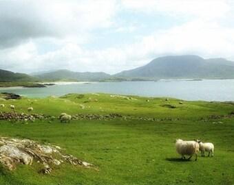 Ireland Photography, St. Patrick's Day Gift,  Ireland Landscape, Sheep Art,  Ocean Wall Decor, Nautical Decor, Beach Print