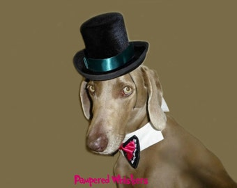 """Dog Top Hat, Wedding Top Hat Dogs, Party Dog Hat for dogs with 16-26"""" collar size"""
