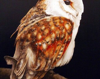 Owl Art Print, Barn Owl Watercolour, bird painting, nature painting, owl, owl picture