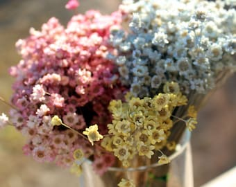 Star flowers-NEW PALE COLORS-30 Dried Mini Wedding flowers-pink-Blue-yellow flowers-Your color choice