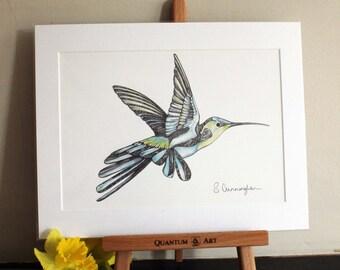Hummingbird Fine Art Print