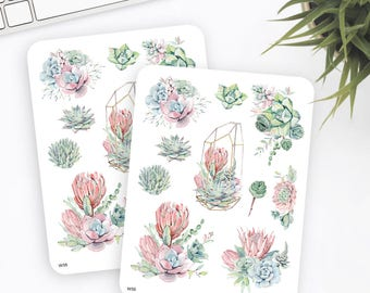 W55   Succulent Stickers   Decorative Stickers   Watercolor Stickers   Planner Stickers   Bullet Journal Stickers