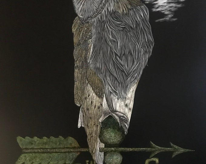 Searching for True North in the Dark-- 18 x 24 inch scratchboard of barn owl!! One of a kind!