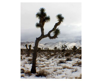 Nature Photography - Photography - Joshua Tree National Park in Winter Snow - Joshua Tree Art - Photographic Art of the Desert / Art