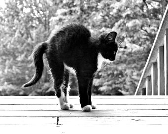 Kitten Photo Black and White Photo Cat Photo Original Potography Nursery Decor