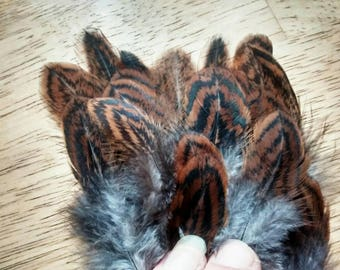 Cruelty free feathers, 25 partridge laced Barnevelder feathers from a domestic chicken