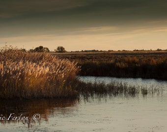 Landscape of the South of France (camargue)