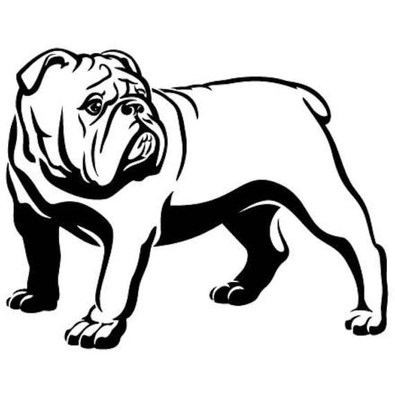 English Bulldog 7 American Mascot Head Spiked Collar Dog