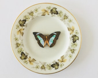 Butterfly White Display Plate 3D Sculpture with Green Floral Leaf Design for Wall Decor Birthday Wedding Anniversary Friendship Gift
