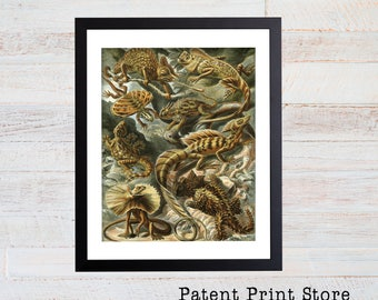 Ernst Haeckel Lizard Illustration, Lizard Poster, Lizard Art Print, Natural History Wall Decor, Wall Art, Reptile Art, Haeckel Print. 090