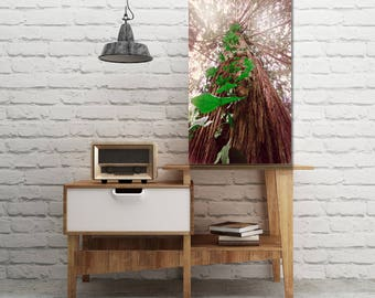 Redwood Tree with Ivy,  Metal Print, Free Shipping, Vivid, Redwoods,  Oregon Coast, Pacific Northwest, Large Wall Art,  Old Growth Tree,