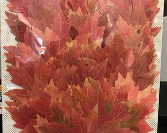 Small fall maple leaves 100 count