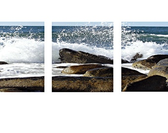Cholla Bay Mexico Triptic