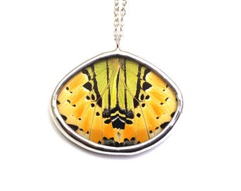 Real Butterfly Wing Necklace Graphium Antiphates Real Butterfly Jewelry Fall Colors Autumn Jewelry  Butterfly Wing Pendant Nature Jewelry
