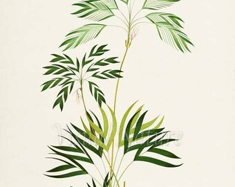 Tropical Palms Art Print, Botanical Art Print, Palms Wall Art, Palms Print, Botanical Print, Home Decor, green art print