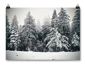 "Large Wall Art, Landscape Print, Winter Photography, Pine Trees, Snow, Winter Decor, Neutral Wall Art, Affordable Art, ""Pine Tree Pa"