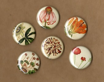 Wildflowers Pinback Buttons set of 6
