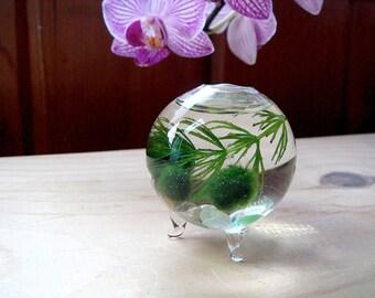 Zen Nano Marimo Moss Ball Ecosphere Orb