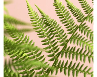 Fern Photograph - Fern Print - Floral Photography - Nature Photograph - Fine Art Photograph - Fern Study On Pink #5 - Green Art - Botanical