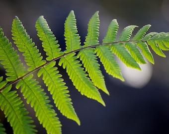 Fern Art - Nature Photography -  Fern Photo -  Fine Art Print -  Dark and Light green - Plant Photography - Fine Art Photo - Nature Wall Art