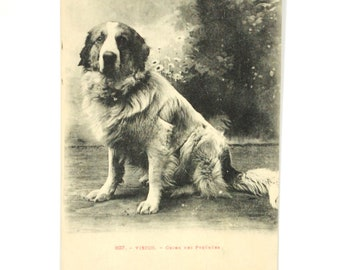 Dog of the pyrenees mountain - 1900-map postcard vintage antique 1900-black and white dog Shepherd pyrenees