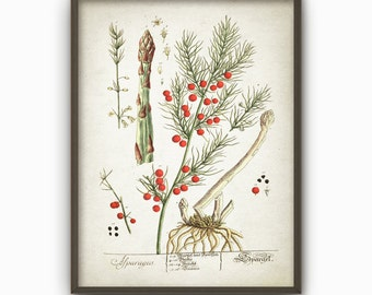Asparagus Antique Botanical Kitchen Wall Art Poster - Vintage Kitchen Home Decor (AB25)