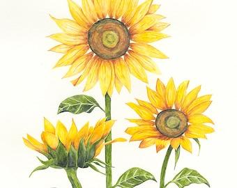 Sunflower Charity Print Botanical Flower