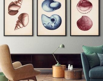 Seashell Prints, Seashell Posters, Nautical Decor, Coastal Art, Scientific Illustration, Coastal Print, Beach Art, Wall Art, Coastal Decor