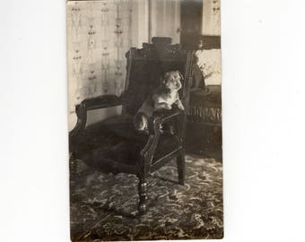 Antique dog rppc photo