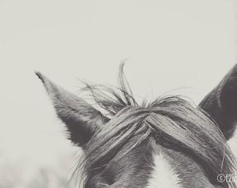 Listen; horse art, wall art, horse fine art photography, loft art, equestrian art, bedroom art, modern art, minimal art, by F2images