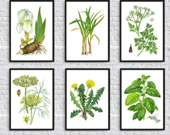 Botanical print wild plants illustration botanical art poster nature print wall art decor kitchen home decor flowers green art  SET of 6