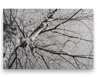 Tree on Canvas