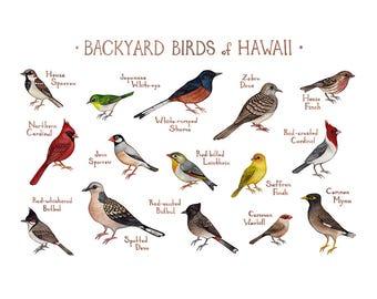 Hawaii Backyard Birds Field Guide Art Print / Watercolor Painting / Wall Art / Nature Print / Bird Poster