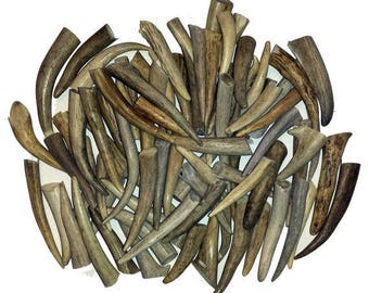 "100 Pack - Deer Antler Tips, Tines, Points - Med. Size 2.5"" To 4"" Long. GRADE A"