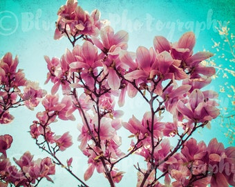 Magnolia Photography, Spring, Pink, Rustic Decor, Shabby Chic, Home Decor, Wall Art, Nursery Print, Living Room, Gardening