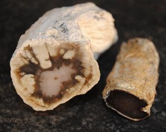 Petrified Wood Limbs - 2 items (1) Larger Wash. St. polished  (1) Smaller Wash. St. polished