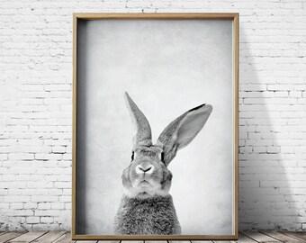 Bunny - Rabbit Print - Woodlands Print - Bunny Rabbit Wall Art - Bunny Rabbit Poster - Bunny Rabbit Art - Bunny Rabbit Poster Animal Prints