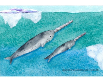 Narwhal, original ACEO