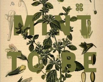 Mint To Be-- Artichoke-- Botanical Print